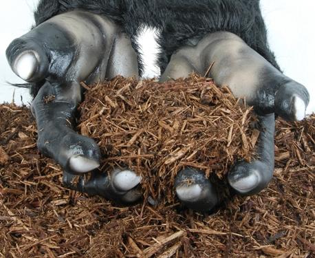 Mulch Cedar Snubnose